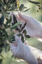 Extract Olive Leaf Brings Happyness