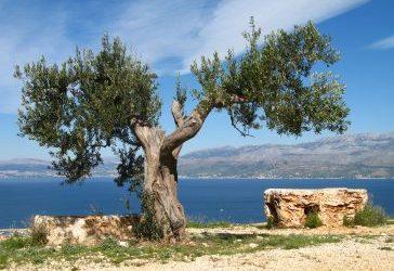 Extract Olive Leaf Hydroxytyrosol AntiDiabetes